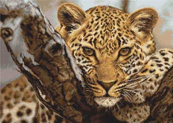 -Леопард