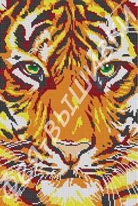 Тигриный взгляд